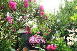 ガーデンメンテナンス(アフターケア)